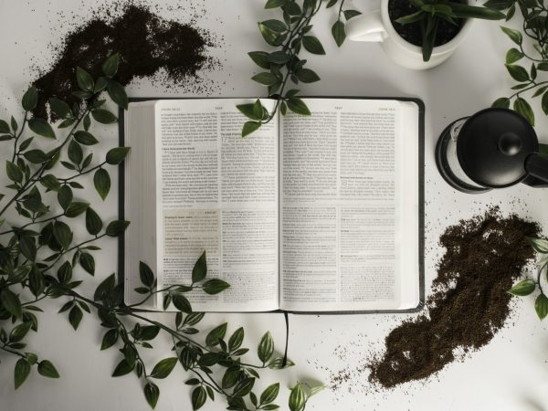 10 Best Study Bibles 2021